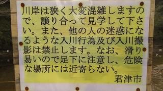 DSC_4284.JPG